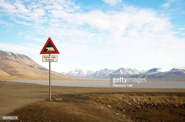 Polar Bear Crossing, Longyearbyen