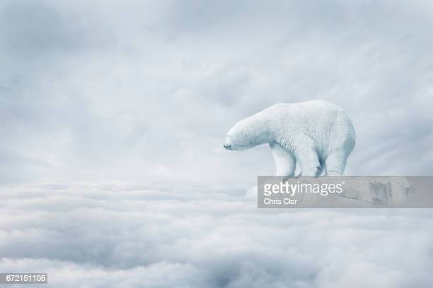 Polar bear floating on ice floe in clouds