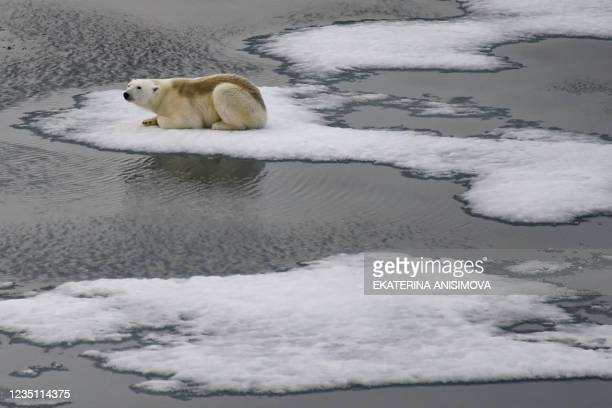 Polar bear is seen on ice floes in the British Channel in the Franz Josef Land archipelago on August 16, 2021.