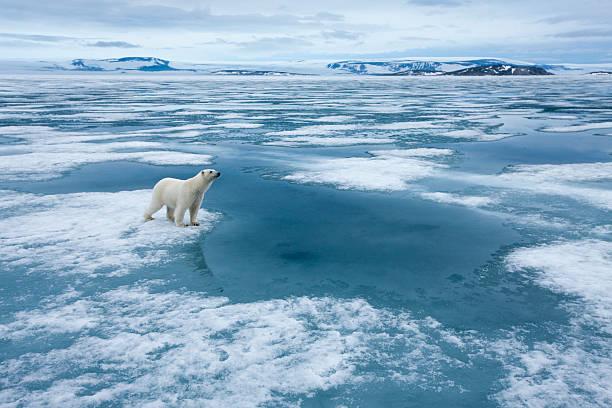 Polar Bear, Nordaustlandet, Svalbard, Norway Wall Art