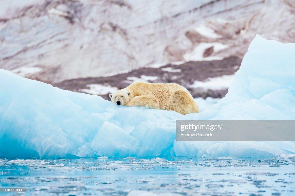 氷山の上のホッキョクグマ : ストックフォト