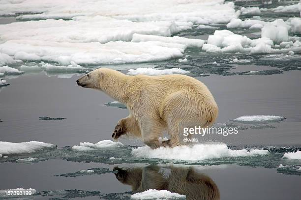polar bear on dire straits over small piece of ice - polar bear stock pictures, royalty-free photos & images