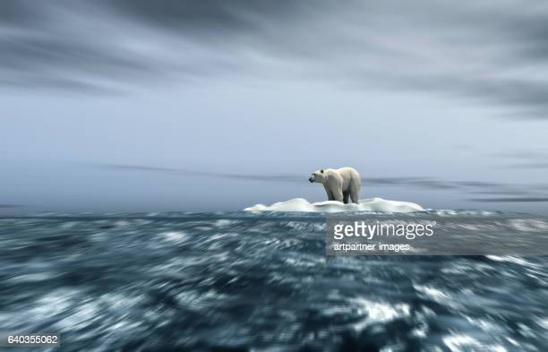 polar bear on ice floe - ice floe stock pictures, royalty-free photos & images