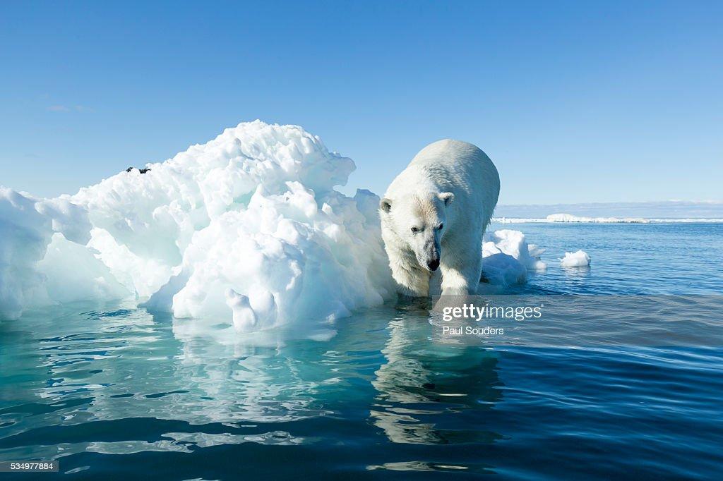 Polar Bear on Iceberg, Hudson Bay, Nunavut, Canada : Stock-Foto