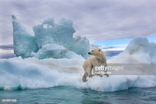 Polar Bear on Sea Ice in Hudson Bay, near Repulse Bay, Nunavut, Canada
