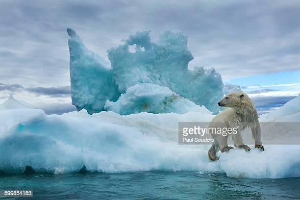 Polar Bear, Repulse Bay, Nunavut, Canada