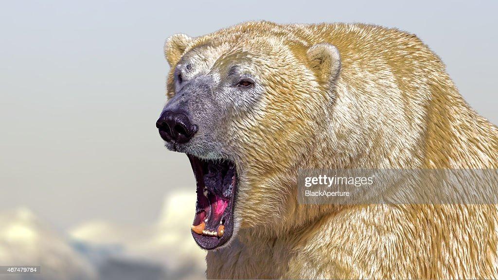 Polar Bear roar : Stock Photo
