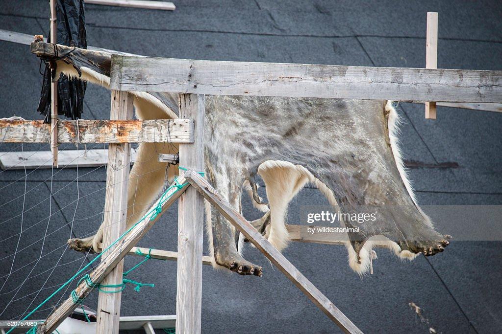 Polar Bear Skin : Stock Photo