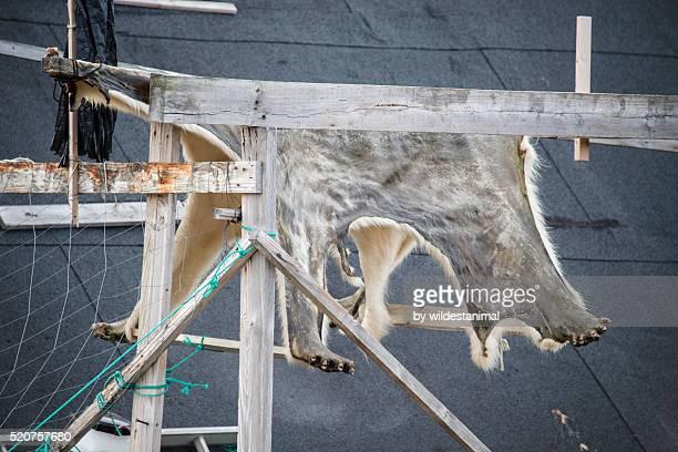polar bear skin - bearskin rug imagens e fotografias de stock