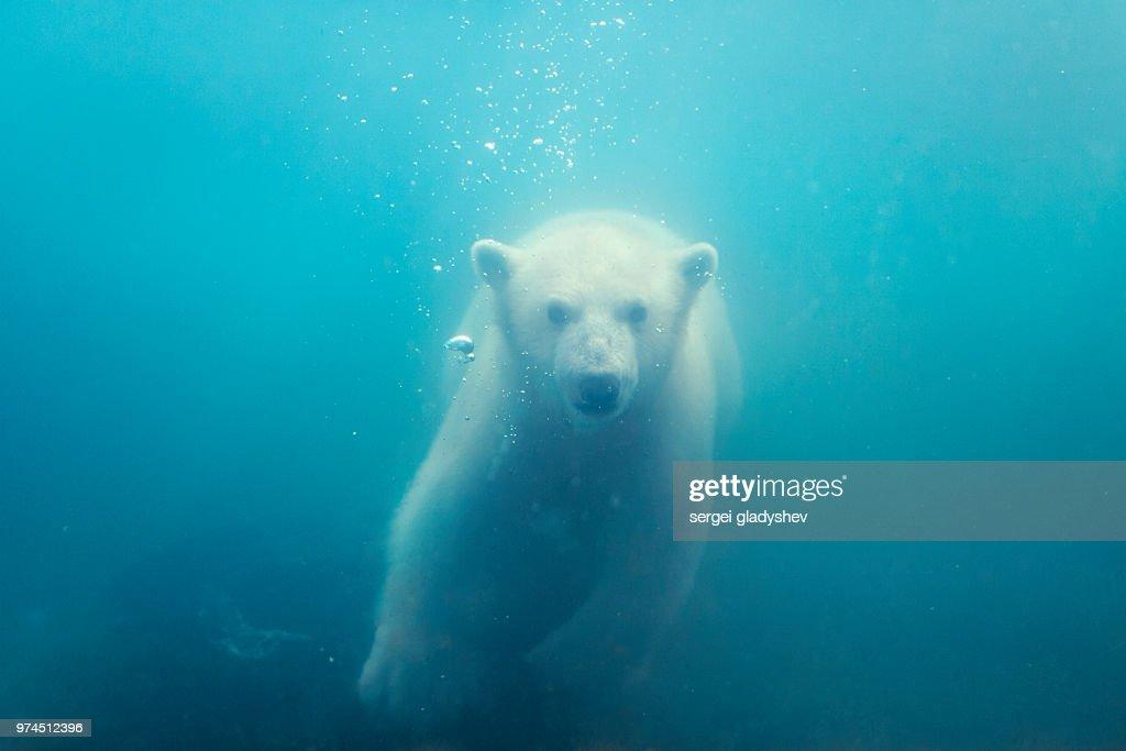richards-playboynaked-big-boobs-polar-bear-swim-pictures-creampie