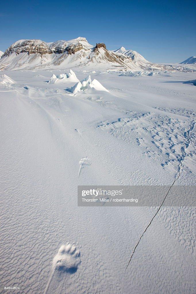 Polar bear track, Billefjord, Svalbard, Spitzbergen, Arctic, Norway, Scandinavia, Europe : Stock Photo