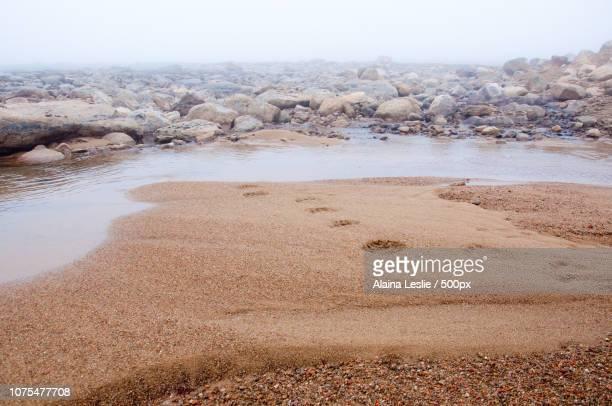 polar bear tracks in the sand