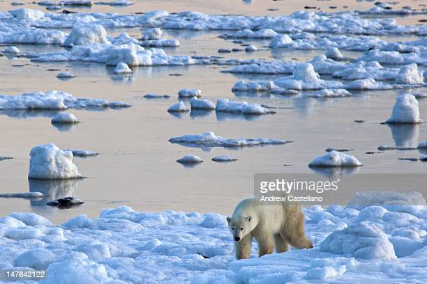 Polar bear walking in strange snowy landscape