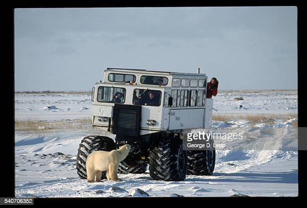 Polar Bear Watching Tundra Buggy