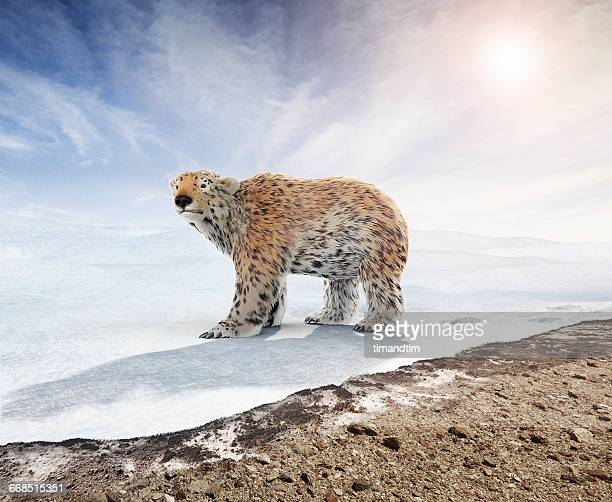 Polar bear with hair changed like a leopard