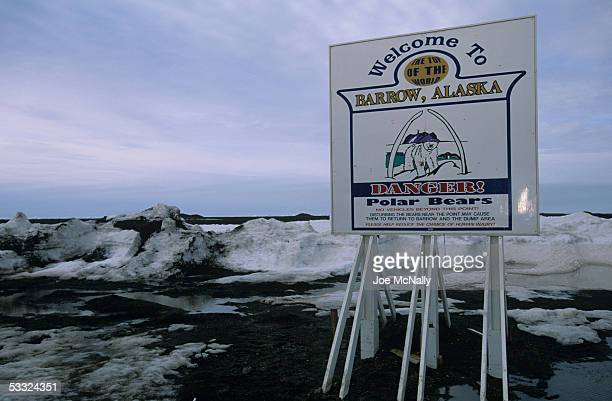 Polar Bears pose a real threat to all Arctic life August 2001 in Barrow Alaska Ornithologist George Divoky has journeyed to Cooper Island off the...