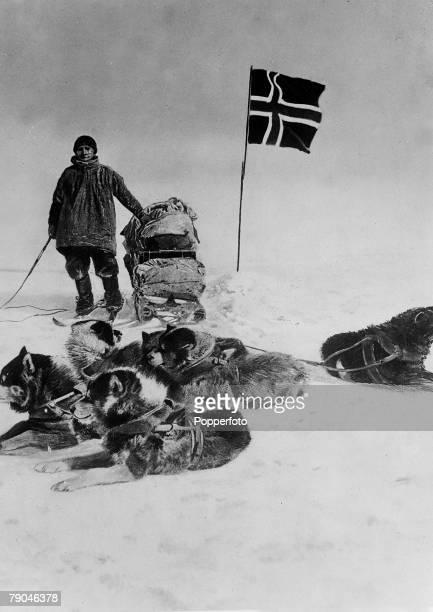 1911 Norwegian polar explorer Helmer Julius Hanssen with dog team at the South Pole having planted the Norwegian flag Along with Roald Amundsen he is...