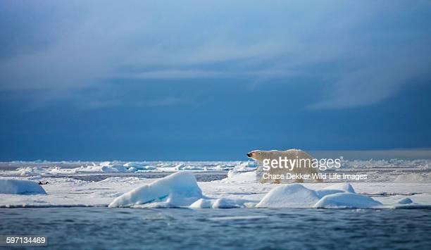 Polar steps
