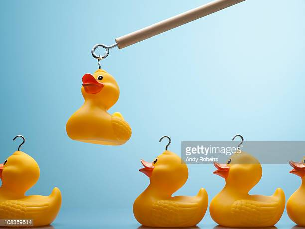 pole lifting rubber duck with hook in its head - recruitment stock pictures, royalty-free photos & images
