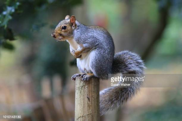 pole position - perching stock photos and pictures