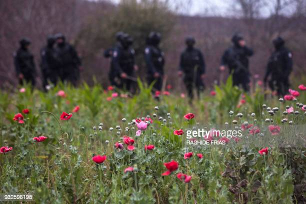 Police agents stand guard during an operation of confiscation of illegal poppy flowers at Los Pericos village, Mocorito municipality in Sinaloa...