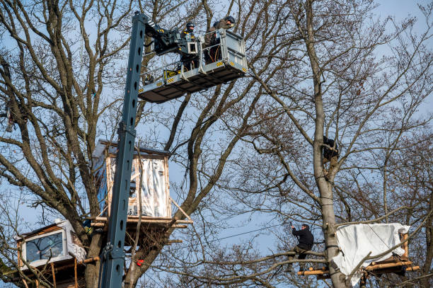 DEU: Dannenroder Forest Activists Are Evicted From Treehouses By Police