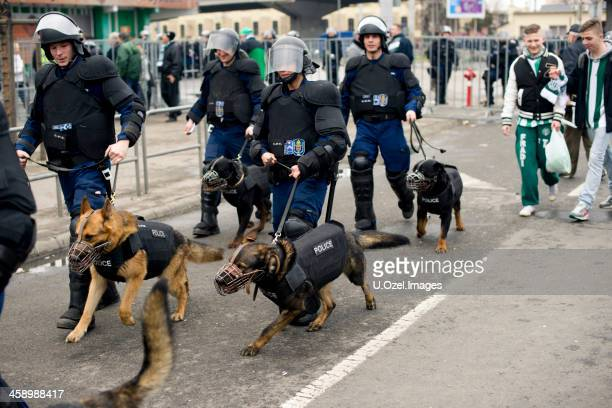 police  - budapest, hungary - police dog stock photos and pictures