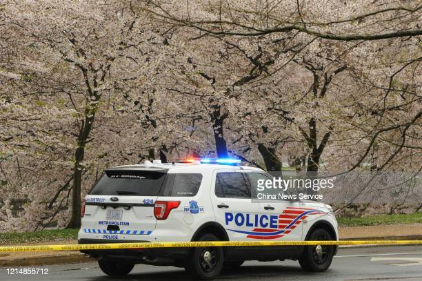 March 25: A police car stops beside blooming cherry trees at Tidal Basin, which is blocked off as novel coronavirus outbreak on March 25, 2020 in...