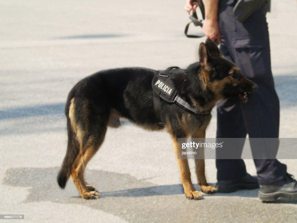 Police dog on anti-terrorist mission : Stock Photo
