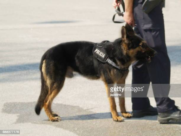 Police dog on anti-terrorist mission