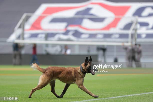 Police dog runs prior the 14th round match between Cruz Azul and Chivas as part of the Torneo Guard1anes 2021 Liga MX at Azteca Stadium on April 10,...