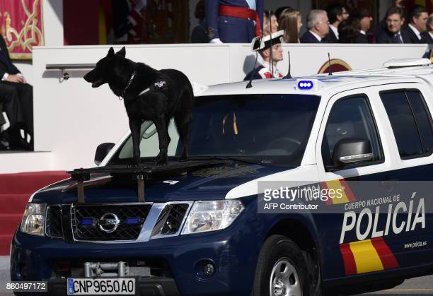 A police dog stands on a National Police car during the Spanish National Day military parade in Madrid on October 12 2017 A Spanish Eurofighter jet...