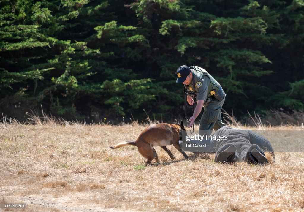 Police dog training with Belgian Malinois with protective clothing : Stock Photo