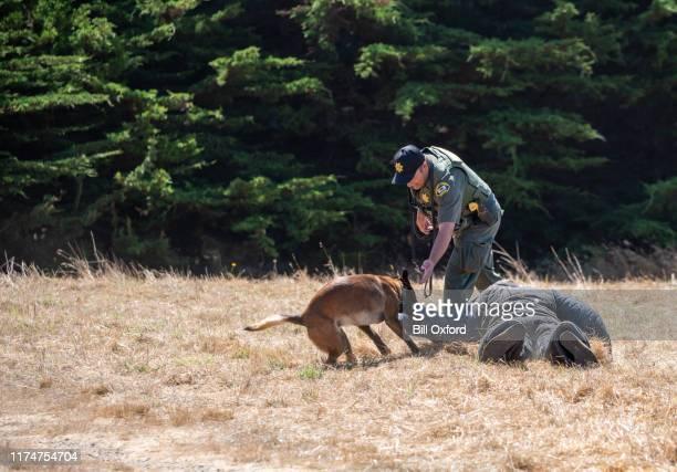 formation de chien de police avec les malinois belges avec des vêtements protecteurs - berger belge malinois photos et images de collection