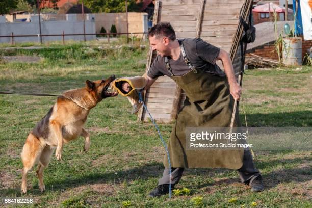 Police dog trains a defense-attack.