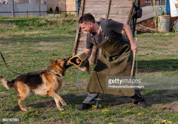 Police dog trains a defense-attack.