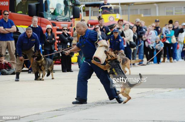 police dog unit training - police dog stock photos and pictures