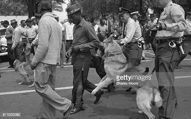 Police dogs, held by officers, jump at a man with torn trousers during a non-violent demonstration, Birmingham, Alabama, May 3, 1963. Police officers...