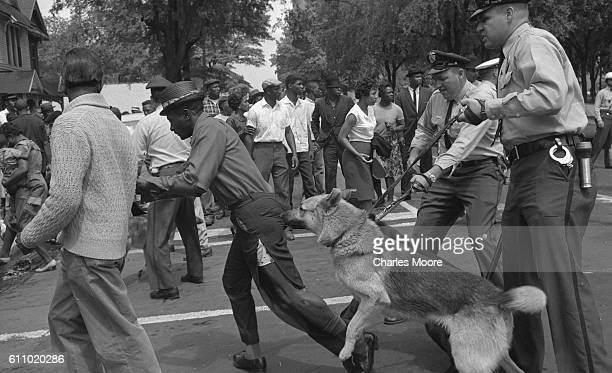 Police dogs held by officers jump at a man with torn trousers during a nonviolent demonstration Birmingham Alabama May 3 1963 Police officers used...