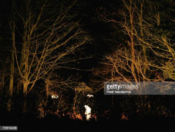 A police forensic officer in white overalls examines the wooded area where a body was discovered near Levington village on December 12 2006 in...