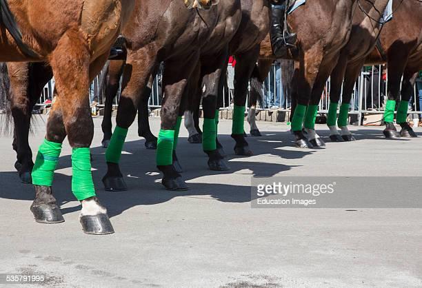 Police horses with green leggings St Patricks Day Parade South Boston Massachusetts