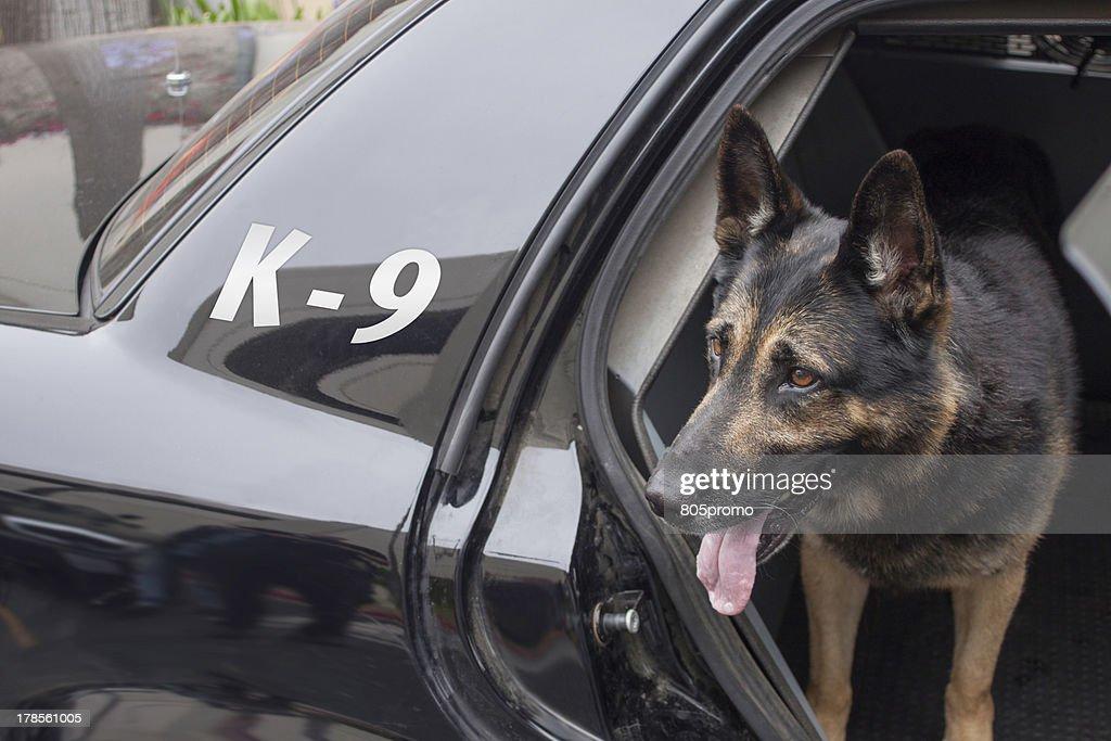Police K-9 in Patrol Car : Stock Photo