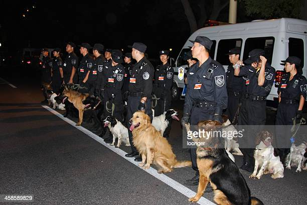 police led dogs preparing for the security check - police dog stock photos and pictures