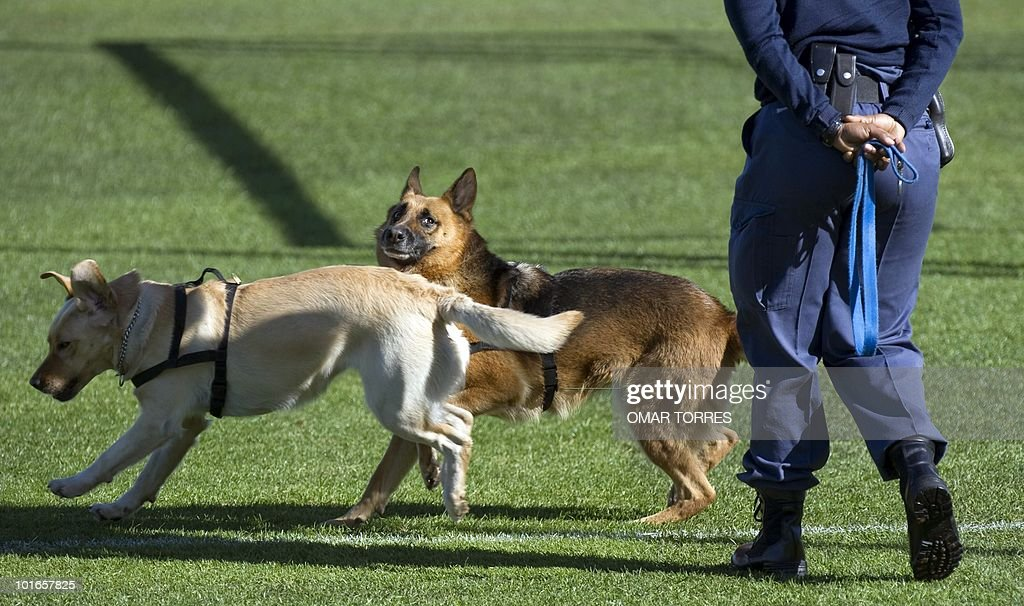 A police officer walks with trained dogs to check the field ahead of a training session of the Mexican football team on June 5, 2010 at the Waterstone College in Johannesburg. The 2010 World Cup will take place in South Africa from June 11 to July 11, the first time on African soil for the biggest and most prestigious competition in sport.