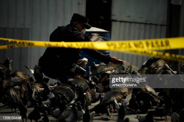 A police officer wearing a protective mask feeds pigeons on a closed streets as most streets have been closed down by the police the reduce peoples...