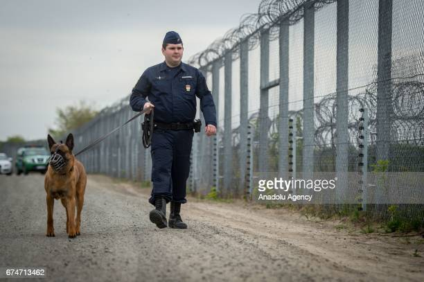 ROSZKE HUNGARY APRIL 28 A police officer with a dog patrols along the border fence on the HungarianSerbian border near Roszke 180 kms southeast of...