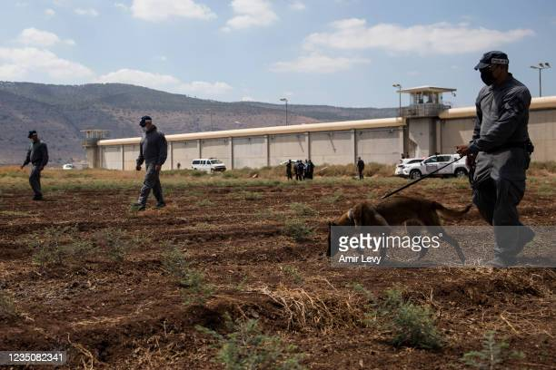 Police officers search as they investigate an area where six Palestinian prisoners managed to escape from Gilboa prison overnight on September 6,...