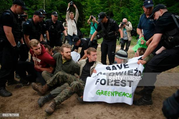 Police removes environmental activists blocking logging machines to stop cutting the trees of the Bialowieza forest in Czerlonka Poland on June 8...