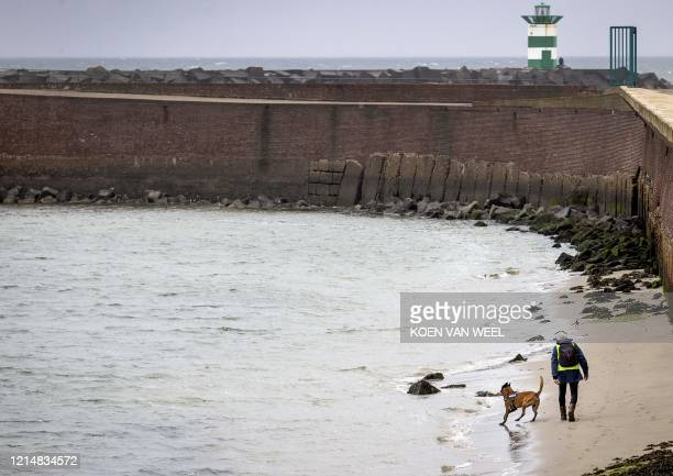 Police service dog searches for the body of a missing surfer at Noordelijk Havenhoofd in Scheveningen, on May 24, 2020. - A 23-year-old man from...