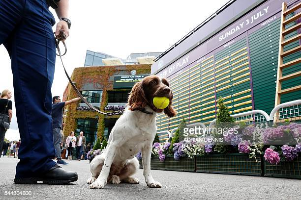 A police sniffer dog carries a tennis ball in its jaws on the seventh day of the 2016 Wimbledon Championships at The All England Lawn Tennis Club in...